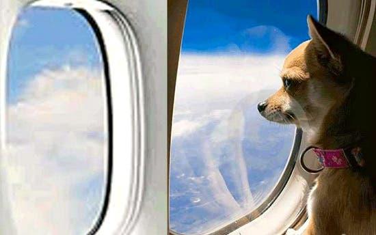 سفر الحيوانات الأليفة
