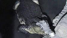 بالصور.. روسي يحتفظ بتمساح في قبو منزله