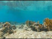 10 حقائق عن البحر الأحمر.. جزر بركانية وأسماك فريدة