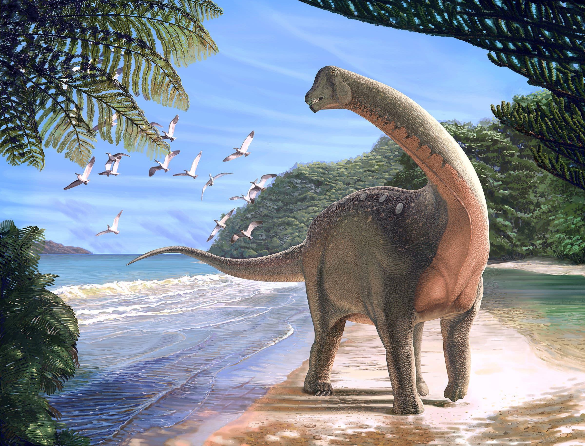 الديناصورات من الزّواحف، وهي في ذلك كالسَّلاحف والأفاعي والعظايا التي تعيش  اليوم على سطح الأرض.