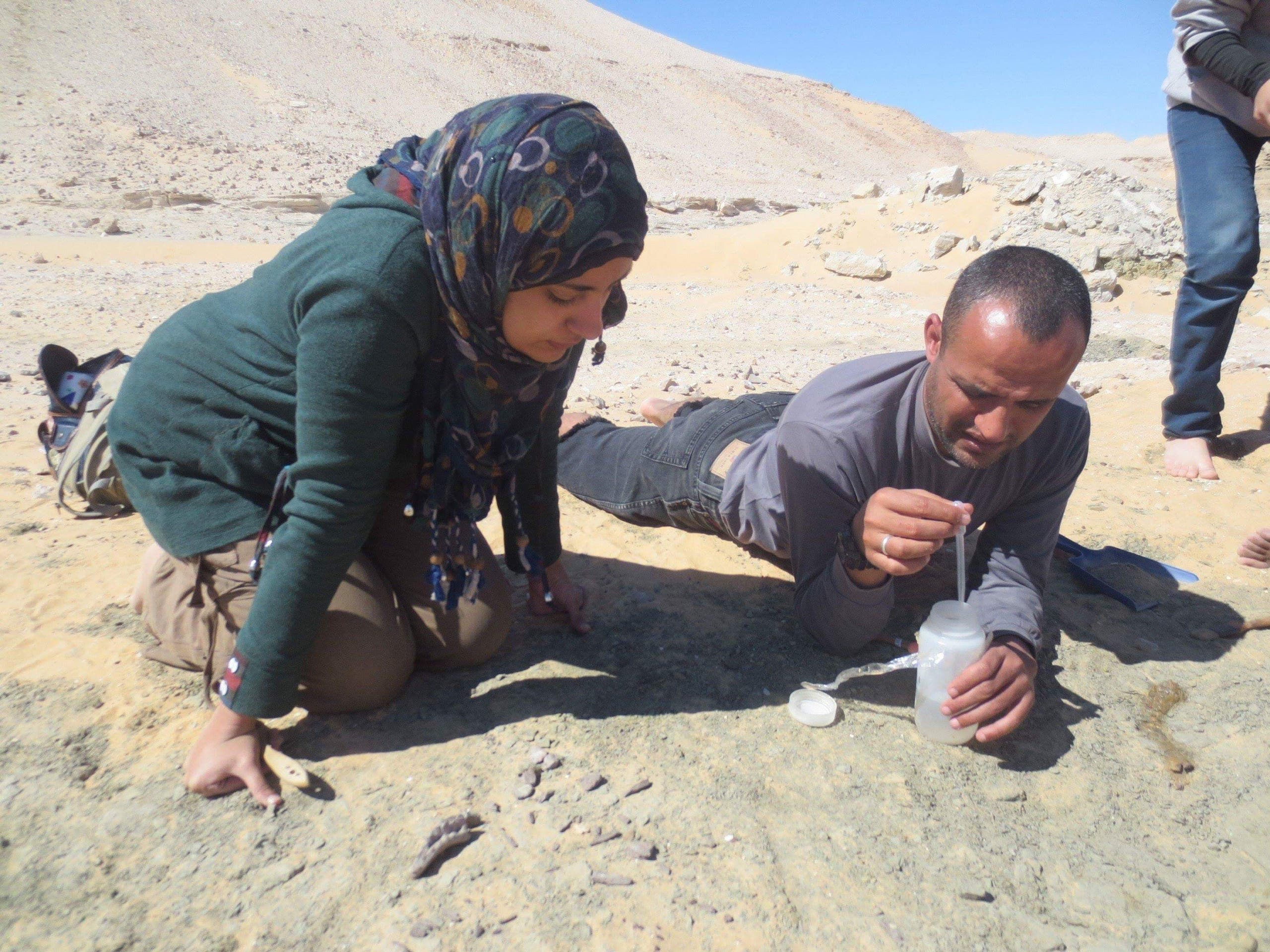 Researchers found a dinosaur fossil in an oasis in the western desert of Egypt. (Supplied)