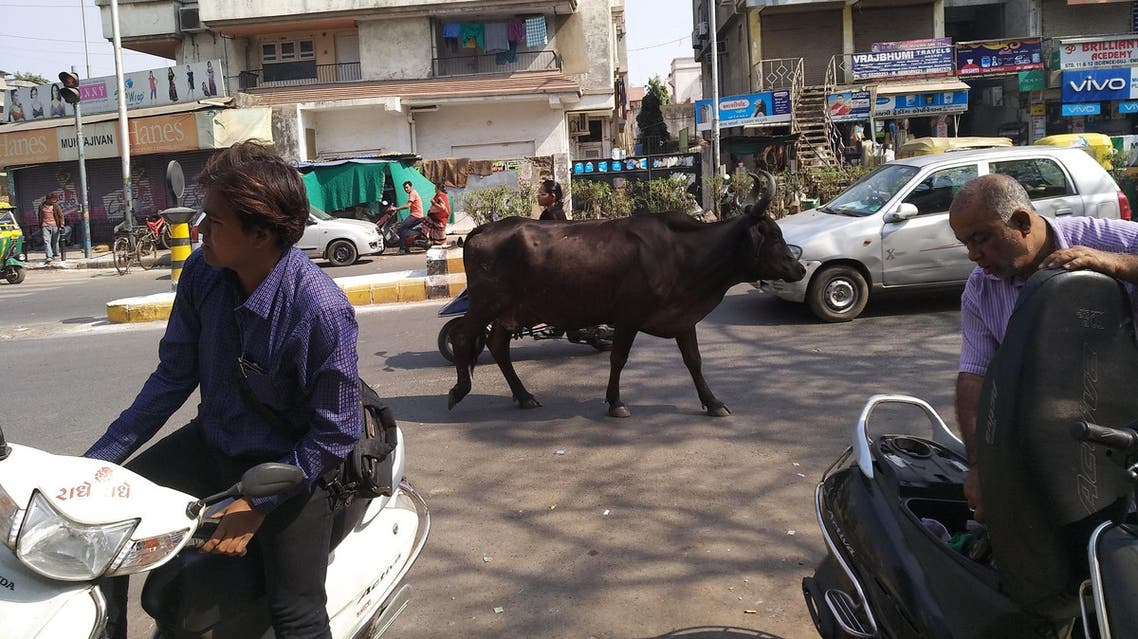 India has 30 per cent of the world's cattle population. (Supplied)