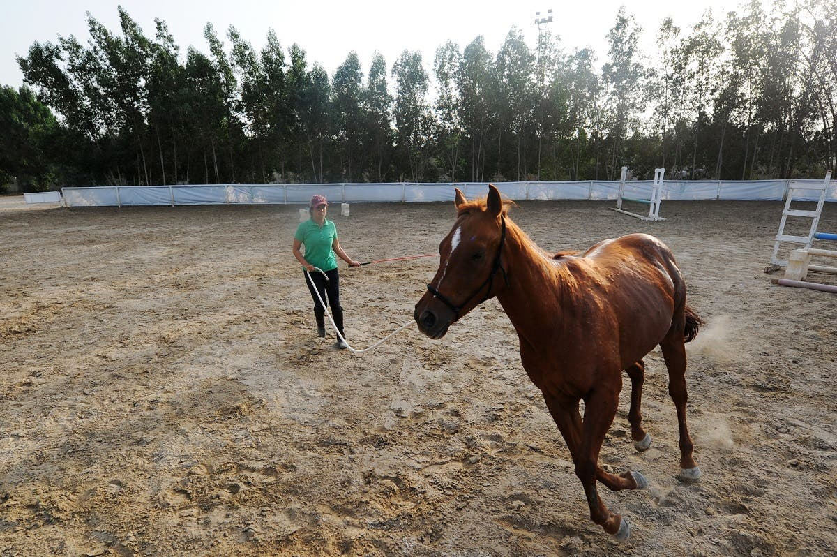 Saudi Dana al-Gosaibi trains a horse on March 1, 2017, in the Red Sea city of Jeddah. (AFP)
