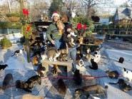 رجل حوّل منزله إلى مأوى لـ300 قطة.. تخيل كم يصرف عليها؟