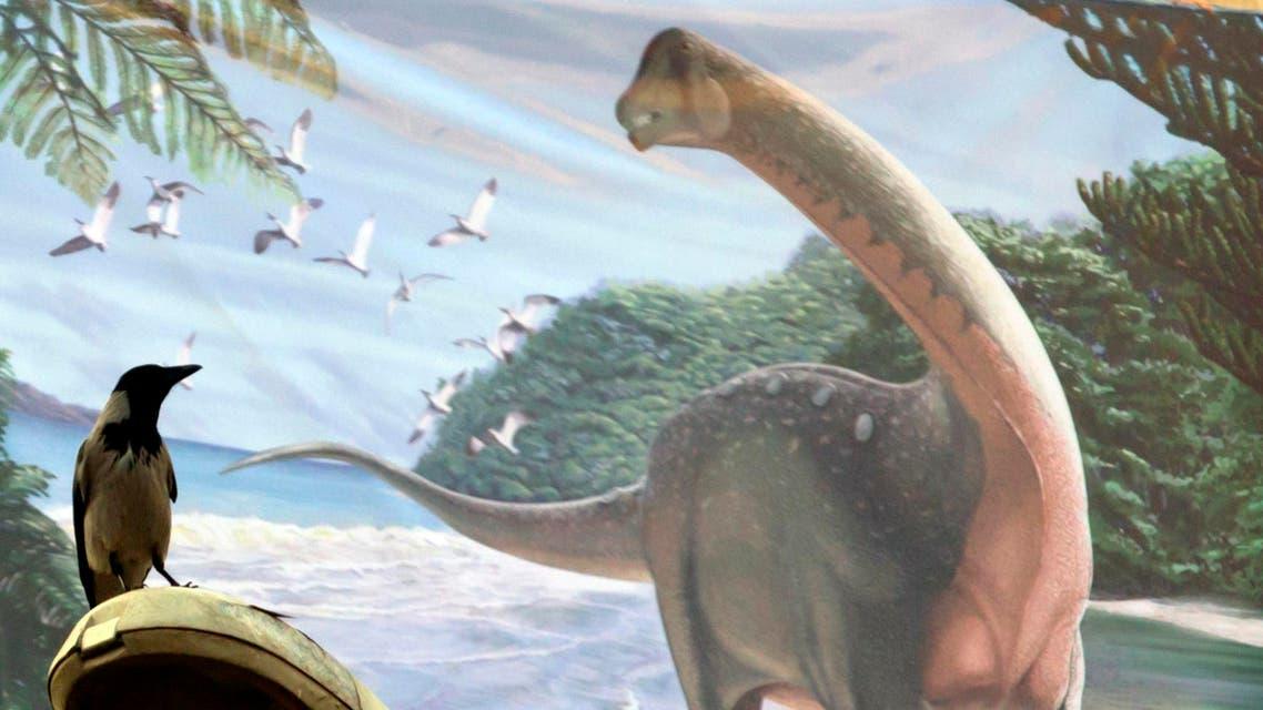 Mansourasaurus AP