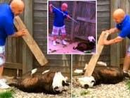 انظر كيف انفرد الإنسان بكلب وضربه بلوح من خشب بلا سبب