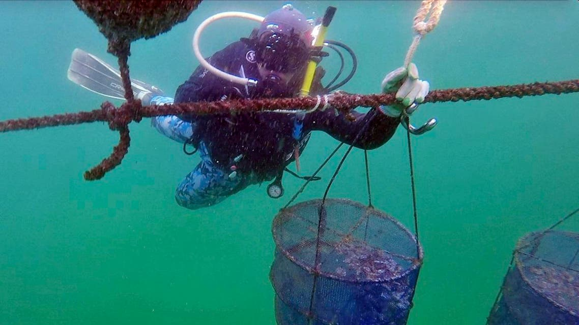 A diver from the Dibba Bay Oyster Farm, fixes a lantern net at the underwater oyster farm, in Dibba, United Arab Emirates. (AP)