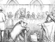 لماذا حاكمت فرنسا أنثى خنزير ونفذت فيها الإعدام؟