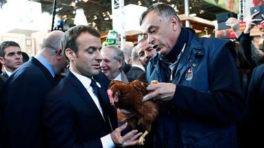 بأمر الرئيس.. دجاجة تدخل الإليزيه وتتقلد منصباً رسمياً!