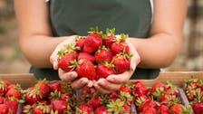 أطعموهم فراولة.. سر توصية غذائية للأطفال مصابي السرطان