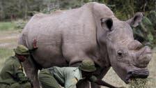 نفوق آخر ذكر من وحيد القرن الأبيض الشمالي عن 45 عاماً