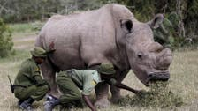 VIDEO: The world's last male northern white rhino has died