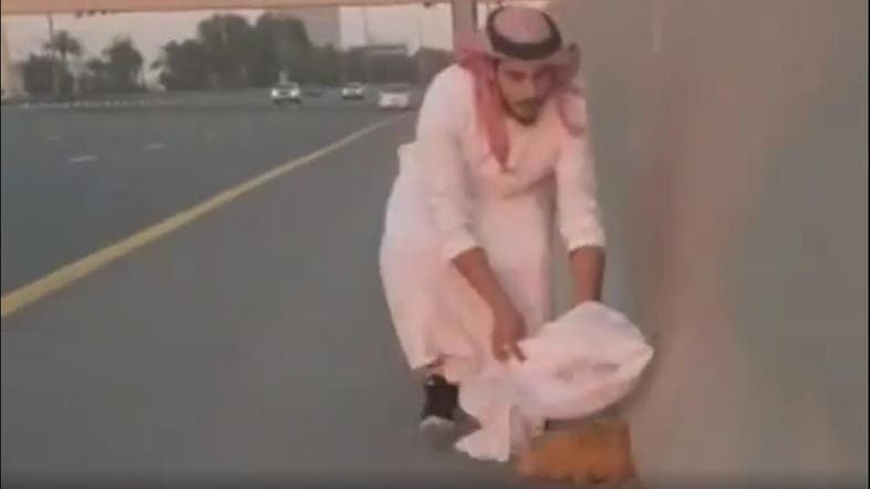 Emirati Man Rescues Cat From Dubai Highway