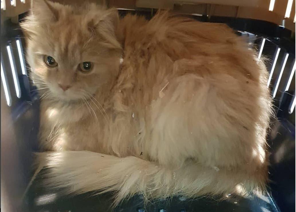 cat (instagram)