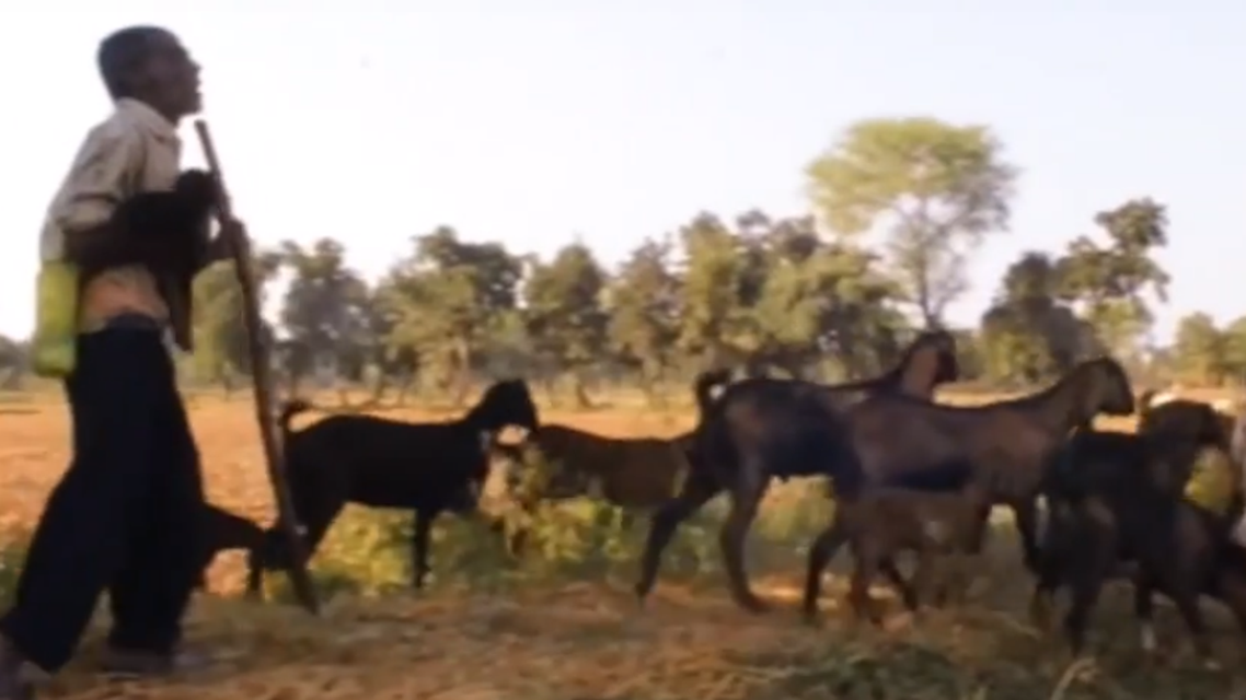 Sabir Khan has 30 goats and plans to add more to the herd. (Screengrab)