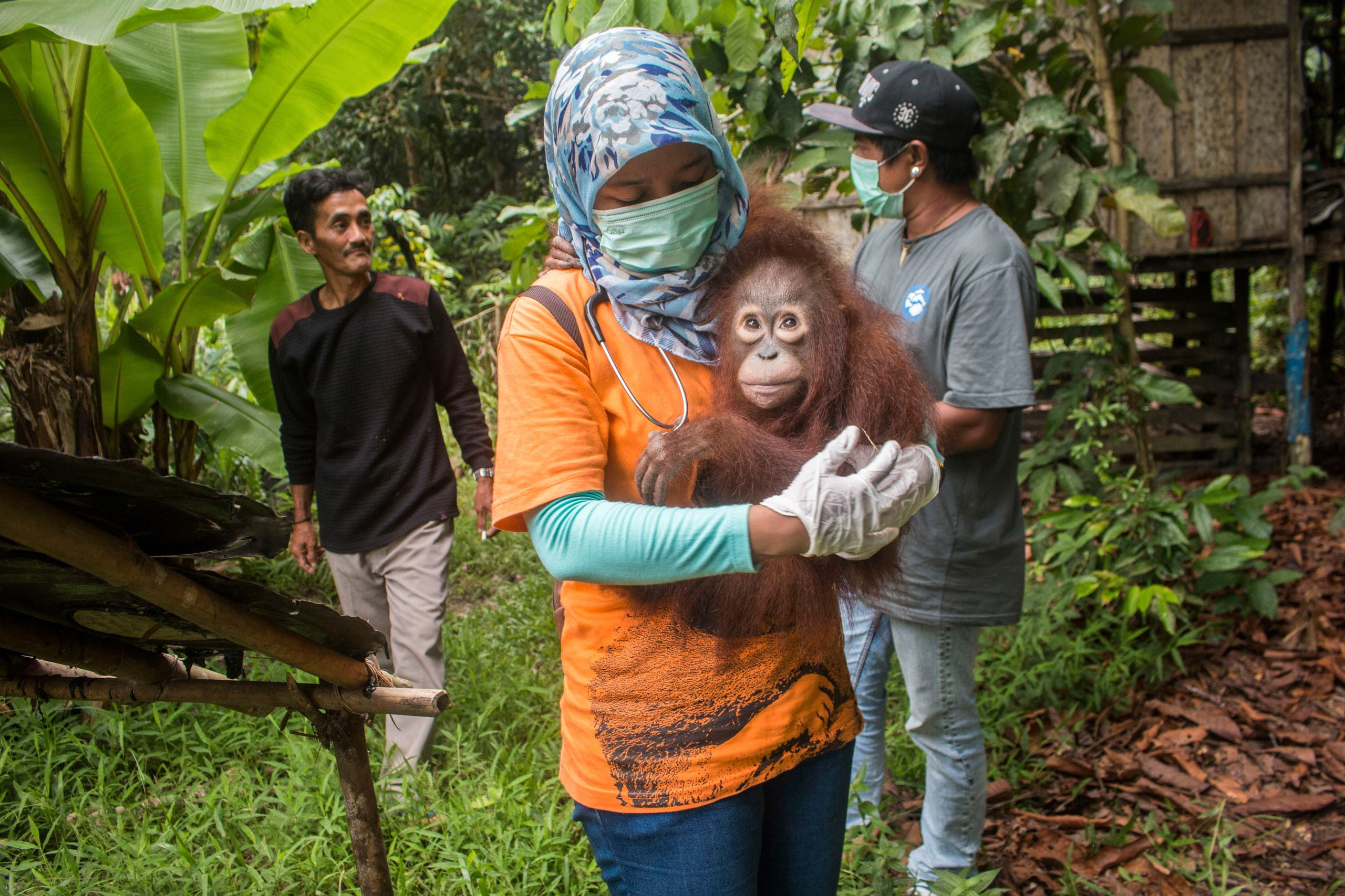 This handout from the International Animal Rescue taken on March 19, 2018 and released on March 23, 2018 shows Utu the orangutan being carried after being rescued from villagers (AFP)