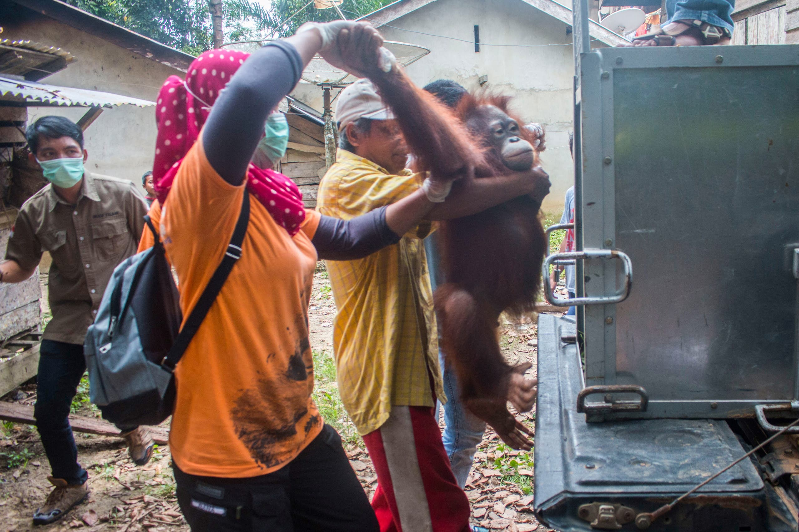 This handout from the International Animal Rescue taken on March 19, 2018 and released on March 23, 2018 shows environmentalists and local officials rescuing Joy the orangutan from villagers who had kept Joy as a house pet in Ketapang, West Kalimantan province. Young orangutan Utu clings to one of his rescuers as he is freed from the tiny wooden cage that has been home for five years. The tiny primate, covered in fuzzy auburn hair, is one of three Bornean orangutan saved in Indonesia over the past two weeks. The rescues are a rare spot of bright news for the critically endangered species, after a string of fatal attacks on the great apes which have been blamed on farmers and hunters. HERIBERTUS / INTERNATIONAL ANIMAL RESCUE / AFP