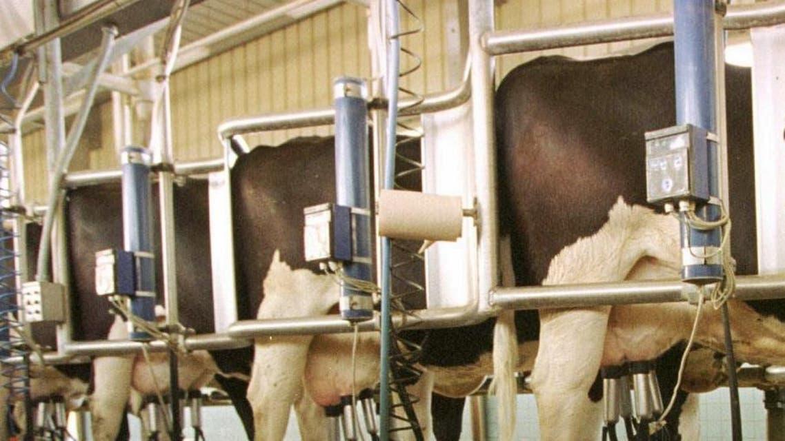 File photo of Al Safi Danone Company's dairy operation. (AP)