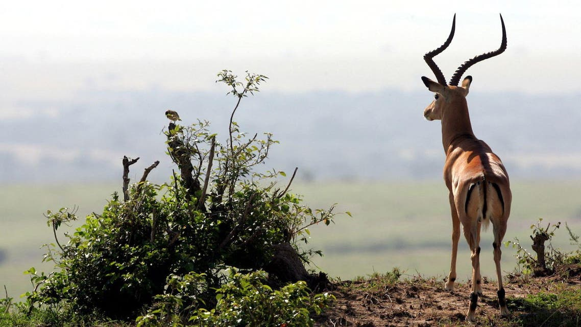 Gazelles can teach us a lot about political partisanship. (Reuters/Radu Sigheti)