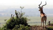 Jordan's gazelle theft case now a 'matter of public opinion'