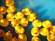"""احذروا """"البط"""" أثناء الاستحمام.. قنبلة بكتيريا وفطريات"""