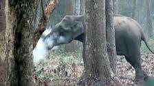 منہ سے دُھواں نکالنے والے ہاتھی نے ماہرین کو حیران کر ڈالا !