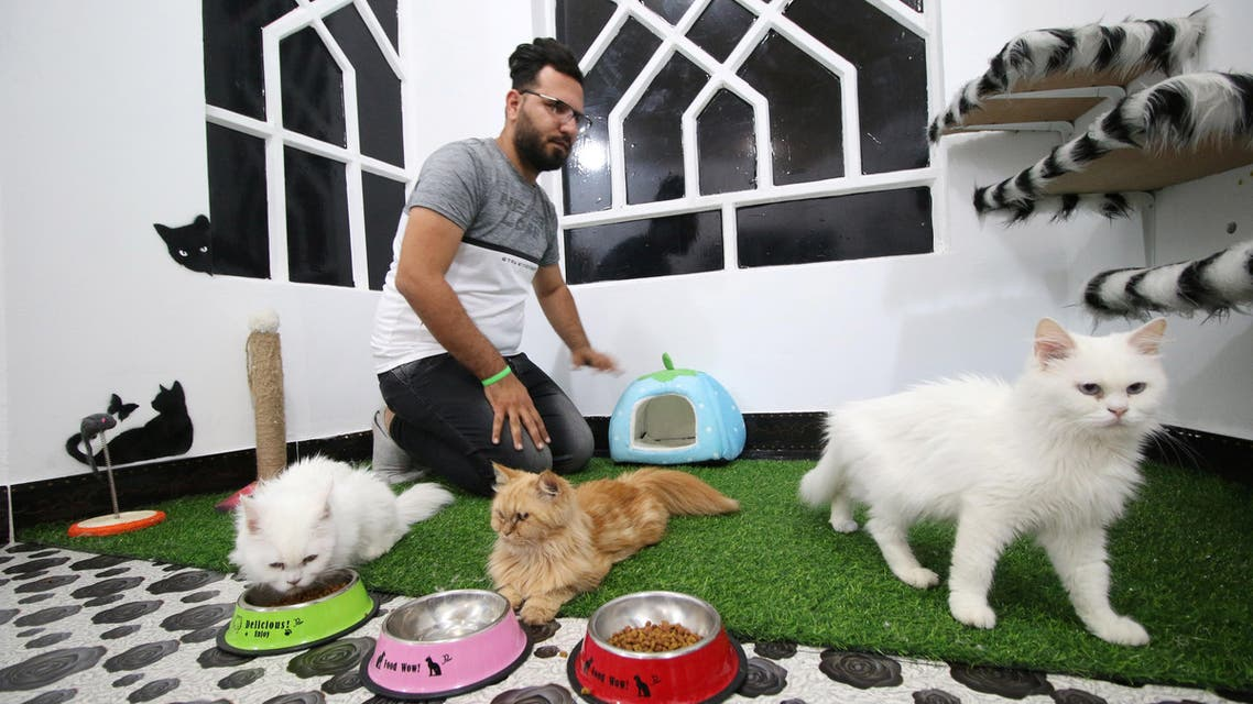 A veterinary medicine student feeds cats in a cat hotel in Basra, Iraq. (Reuters)