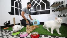 Far from war, Basra's cats lap it up in their own hotel