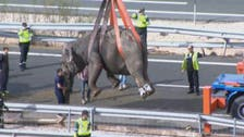 WATCH: Elephants disaster on a Spanish highway