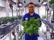 علماء يحصدون أول خضروات زُرعت بدون تربة ولا ضوء شمس