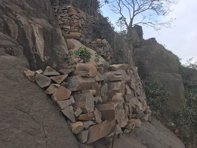 شتلات البن في اعالي جبال اليمن