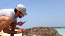 WATCH: Dubai crown prince rescues a sea turtle