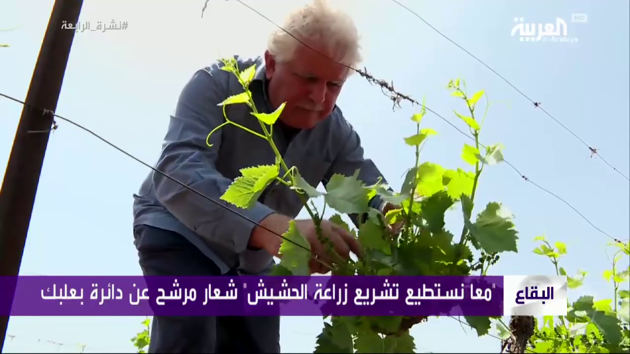 In Lebanon, one farmer-turned-candidate is running on a pro-cannabis platform