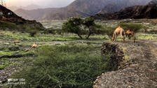 PICTURES: Breathtaking views of Saudi's Tayeh Valley in Asir