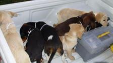 امریکا: کولمبیئن ڈاکٹر پر کتّوں کی آنتڑیوں میں منشیات اسمگل کرنے کا الزام