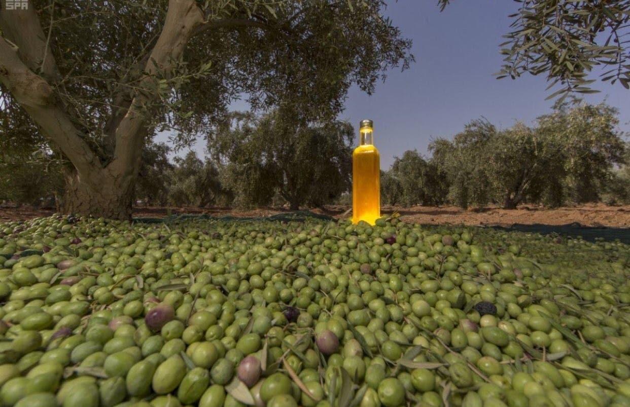 olive saudi