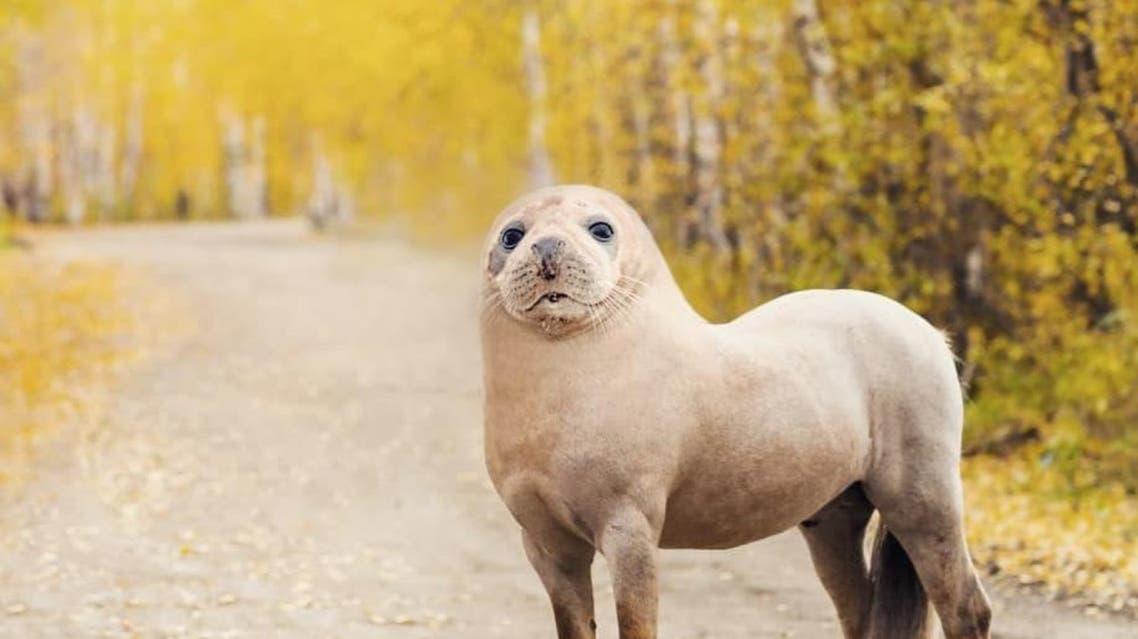 چه نامی برای این جانوران انتخاب میکنید؟