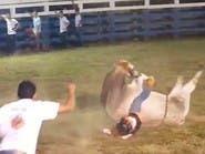 فيديو صادم.. ثور هائج يحطم عظام راكبه