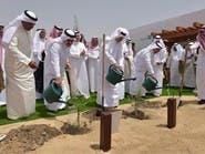 أرامكو تزرع مليون شجرة شرق السعودية
