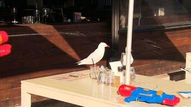 مطعم يزود زبائنه ببنادق مياه.. لإبعاد الطيور عن موائدهم