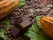 علماء يطورون الكاكاو جينياً لضمان إنتاج الشوكولاتة