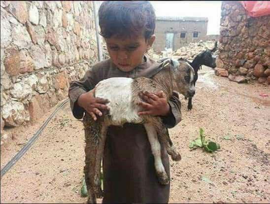 طفل في سقطرى ينقذ اغنامه من الإعصار