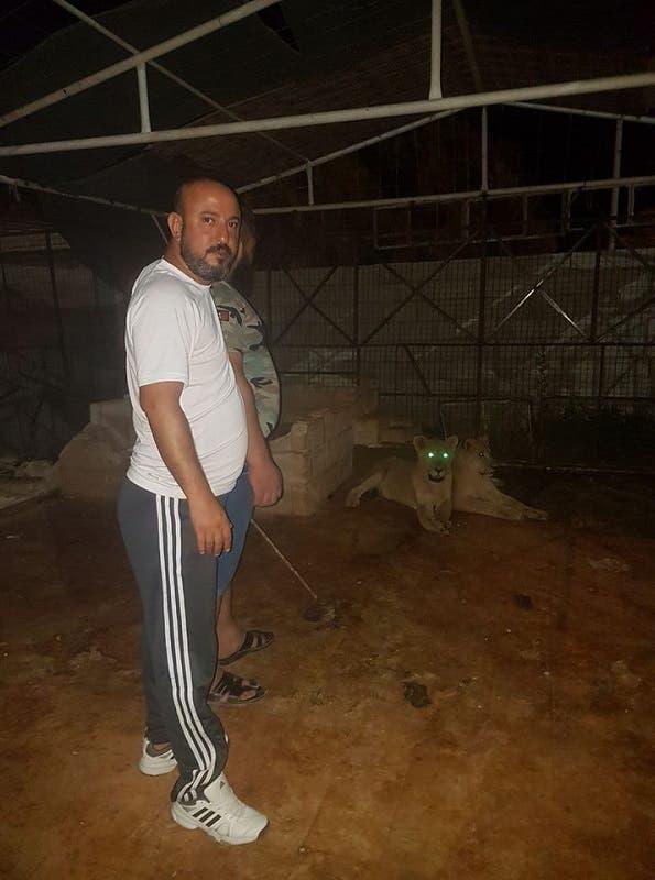 شاهد | حصان بين فكّي أسدين جائعين بسوريا