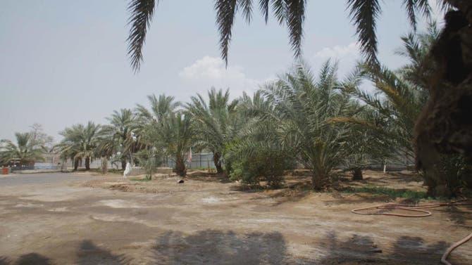 وقفات على خطى العرب | وادي العقيق
