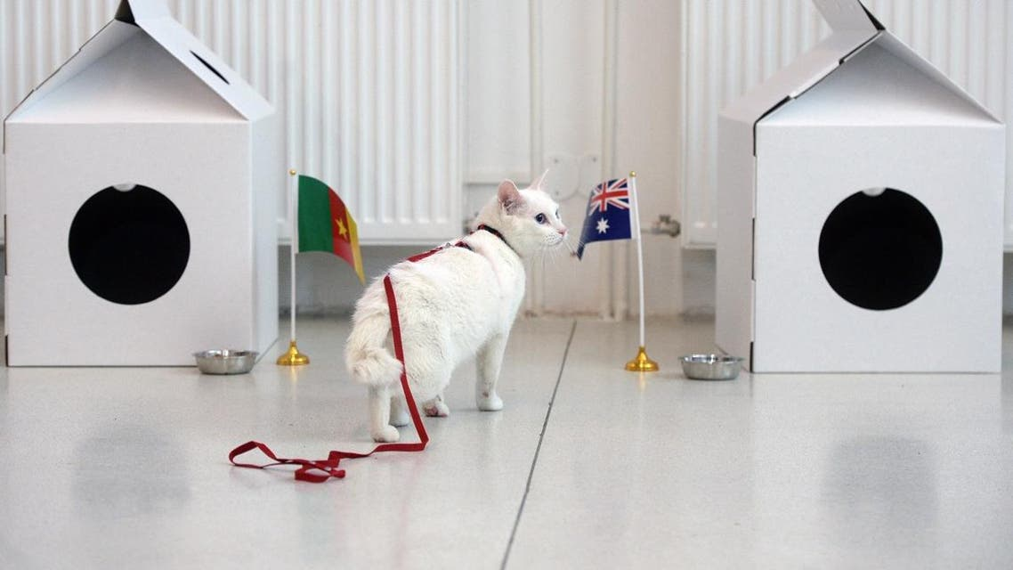 Achilles the cat, one of the State Hermitage Museum mice hunters, approaches an Australian national flag during a prediction event of the results. (AFP)