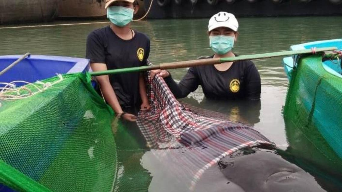 The whale was found barely alive Monday at the Thai canal near the Malaysian border. (Twitter)