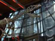 هيكل ديناصور يباع بمليوني يورو في مزاد باريسي