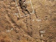 صور..آثار أقدم كائن حي على الأرض قبل 550 مليون سنة