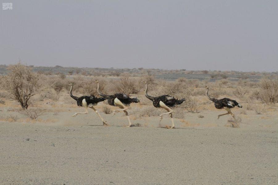 https://english.alarabiya.net/en/features/2018/06/02/Saudi-Arabia-determines-names-several-areas-royal-reserves.html