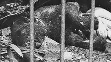 أول قصف جوي لبرلين قتل خلاله الفيل الوحيد بالمدينة